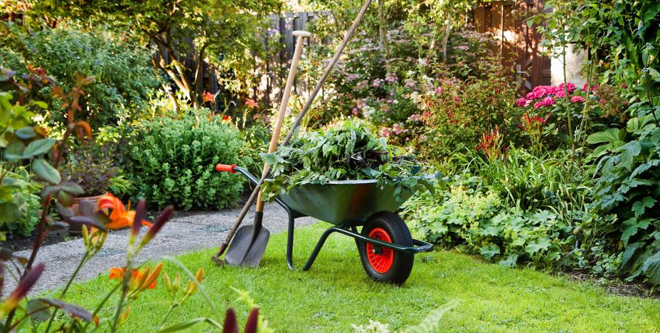 trädgårdsskötsel Bromma